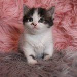 rosa_6v (36)